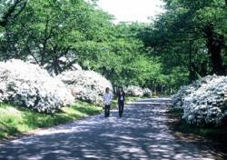 北上市内の自然歩道コース1:桜とつつじのみち