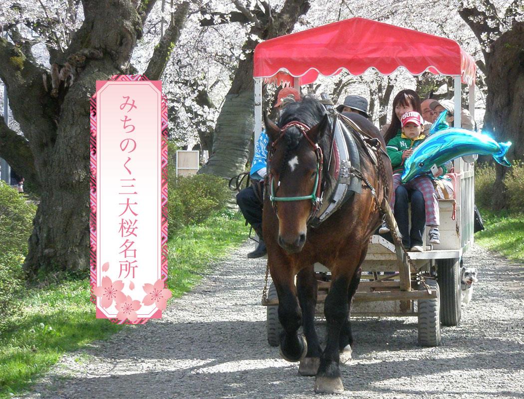 展勝地はみちのく三大桜名所の一つです