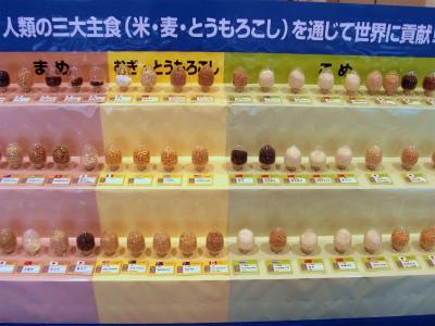 三大主食の展示